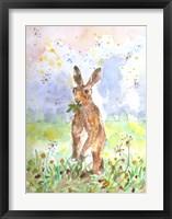 Framed Hare Today