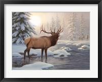 Framed Elk Bugleing