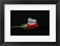 Dennis Brandi Baby On Rose Framed Print