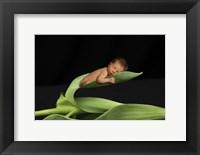 Framed T. Foucas Baby Leaves