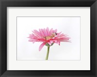 Hartley Luana Daisy Framed Print