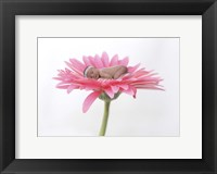 Hovey Tanya Light Pink Daisy I Framed Print
