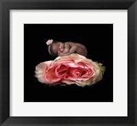 Framed Peterson Martha Compressed Rose