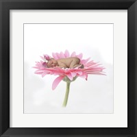 Call Chari White Pink Daisy Framed Print