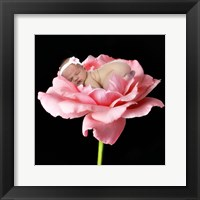Baby Snuggling On Flower Framed Print