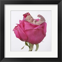 Hovey Single Rose Framed Print