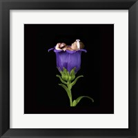 Parsons Purple Baby Framed Print