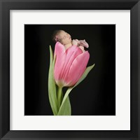 Pruitt Tanya Single Tulip Pink Framed Print