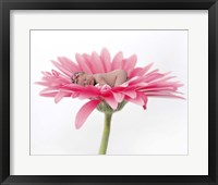Gardiner Baby On Pink Daisy Framed Print