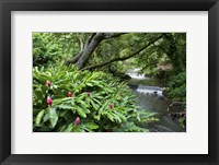 Framed Nuuanu Stream 1