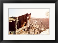 Framed Brown Horse
