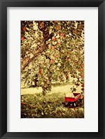 Framed Apple Picking