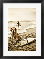 Framed Dog Surfer