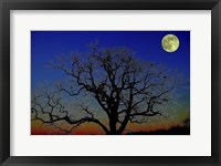 Framed Moonlight