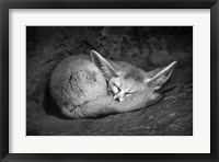 Framed Fennec Fox