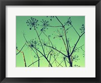 Framed Cow Parsley I