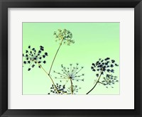 Framed Cow Parsley II