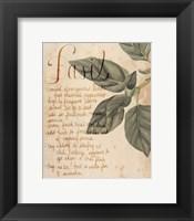 Herb Study I Framed Print