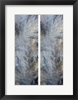 2-Up Pampas Panels II Framed Print