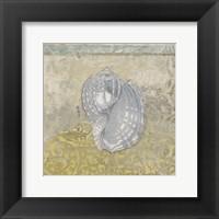 Coastal Cameo III Framed Print