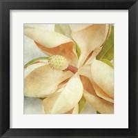 Framed Vintage Magnolia I