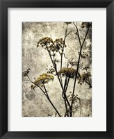 Big Sur Yarrow II Framed Print