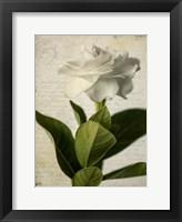 Framed Gardenia Grunge I