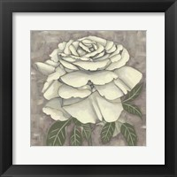Silver Rose II Framed Print