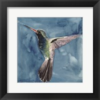 Framed Watercolor Hummingbird II