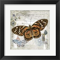 Butterfly Artifact I Framed Print