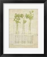 Framed Herb Still Life I