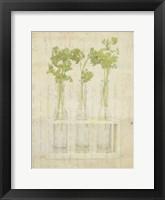 Framed Herb Still Life I