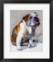 Major Wembly E. Bull Dog Framed Print
