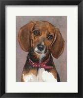 Framed Lucy English Pocket Beagle