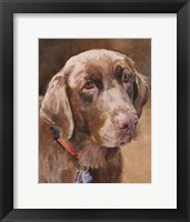 Framed Bell Chocolate Lab