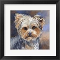 Framed Sadie Belle Yorkshire Terrier