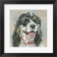 Framed Winston Cocker Spaniel