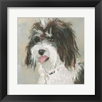 Framed Neely Schnoodle
