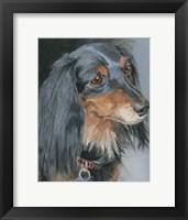 Framed Natalie Long-haired Dachshund