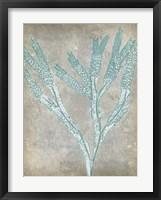 Spa Seaweed II Framed Print