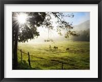 Morning Graze I Framed Print