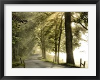 Fresh Morning II Framed Print