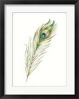 Watercolor Peacock Feather II Framed Print
