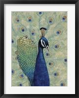 Blue Peacock I Framed Print