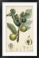 Framed Exotic Fruits I