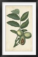 Framed Exotic Fruits IV