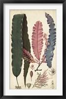 Framed Turpin Seaweed II