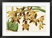 Framed Graceful Orchids I