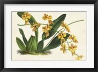 Framed Graceful Orchids III