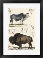 Framed Antique Cow & Bison Study